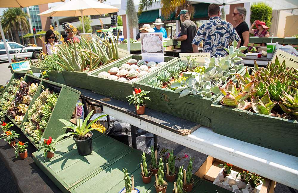 heritage Succulents Vendor